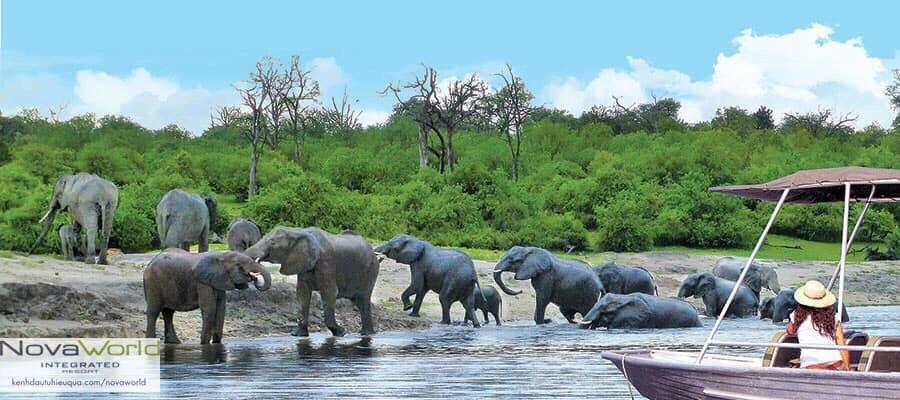 Công viên Safari trong Novaworld Phan Thiết