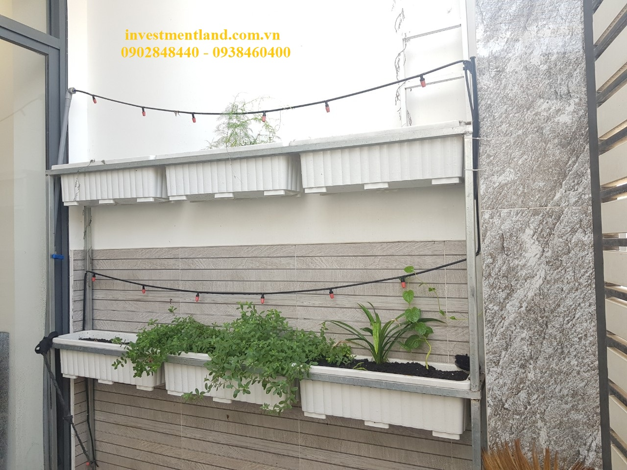 Sân trồng rau nhà đường Gò Cát phường Phú Hữu Quận 9